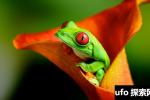 蜻蛙是怎样睡觉的?蜻蛙的十大特性和生活特点