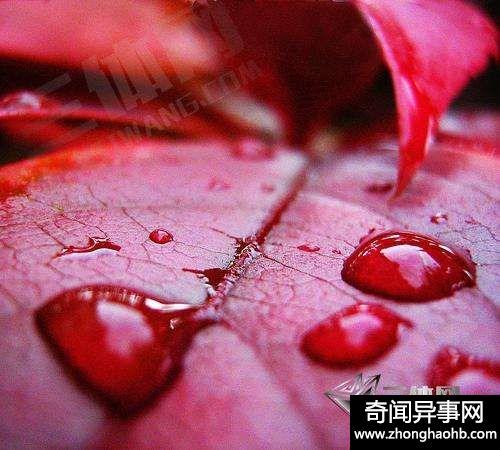 恐怖的血雨其实是一种自然现象,并非外星人所(奇闻)