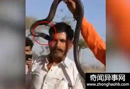 印度男子被眼镜蛇亲了一口没在意:一小时后身亡