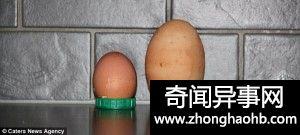 鸡蛋中长鸡蛋,这是神鸡?