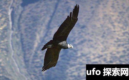 世界上最大的鸟有多大 会不会伤害人类