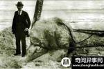 百年悬谜:圣奥古斯丁海怪之谜至今无解【图】